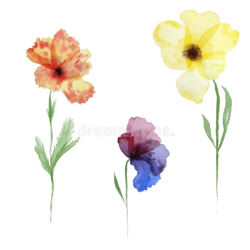 Watecolor set of transparent layered flowers. Hand painted elements isolated on white. Perfect for print, cards making and web design royalty free illustration