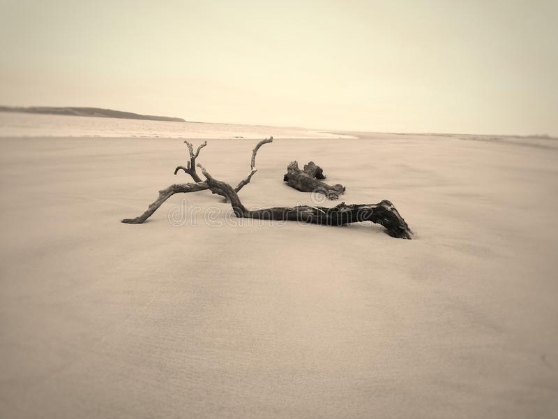 Beach tranquility and solitude. Water Beach tranquility solitude piece sand ocean sea driftwood wood log landscape horizon royalty free stock photography