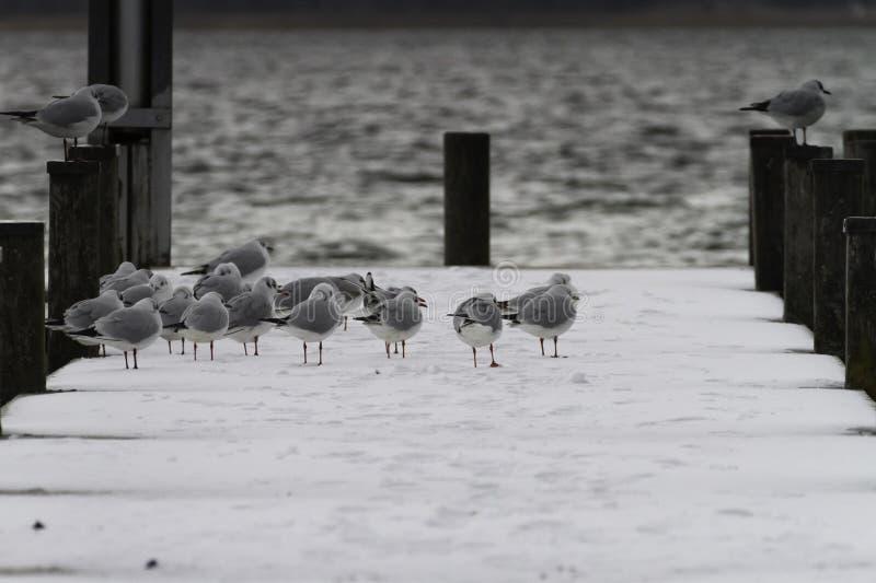 Water Bird, Fauna, Snow, Bird royalty free stock photo