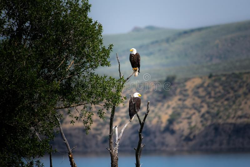 Water, Bird, Sky, Tree royalty free stock photos