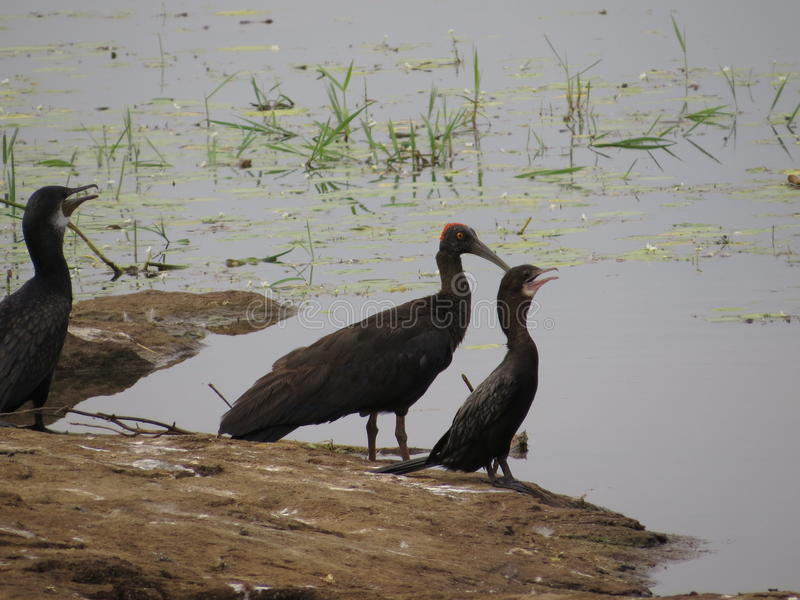 Water Birds royalty free stock images