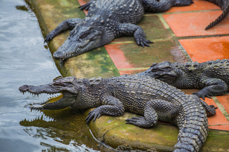Water bodies on the Crocodile Farm in Dalat. Vietnam stock images
