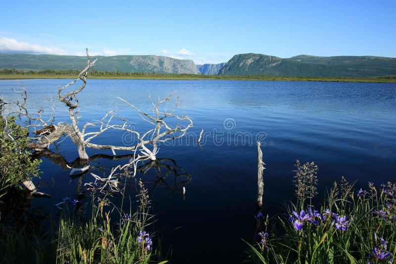 Water in Bog at Western Brook stock images