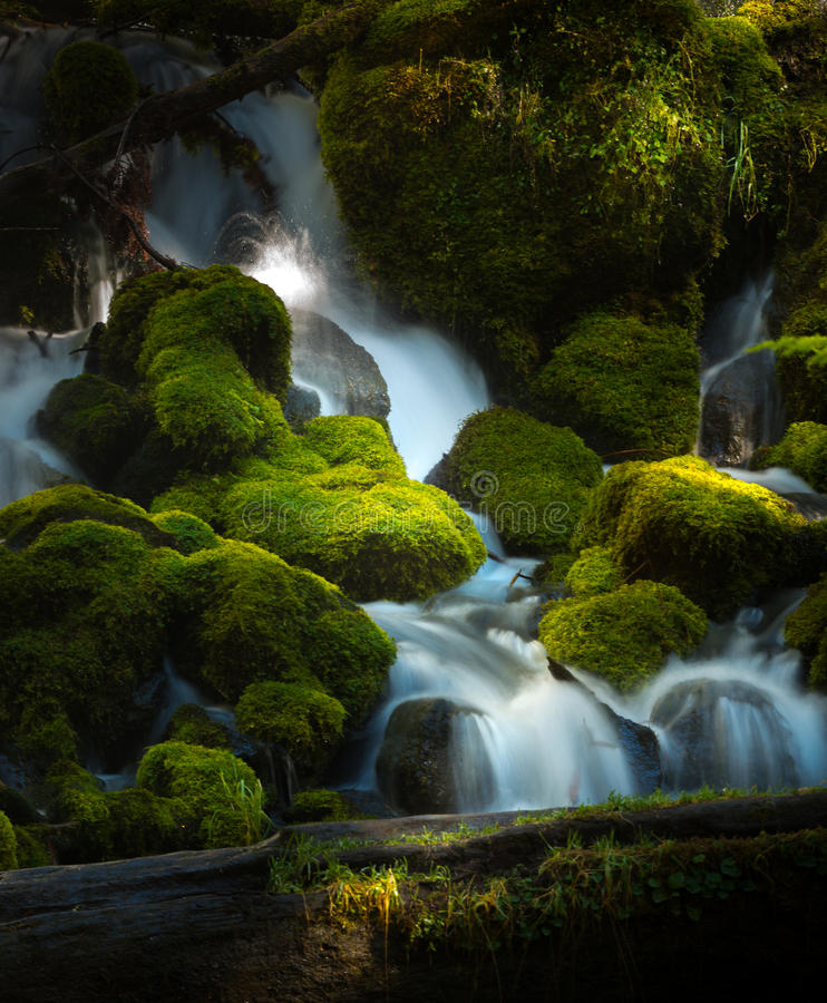 Water Cascade Clearwater Creek Umpqua National Forest royalty free stock photo