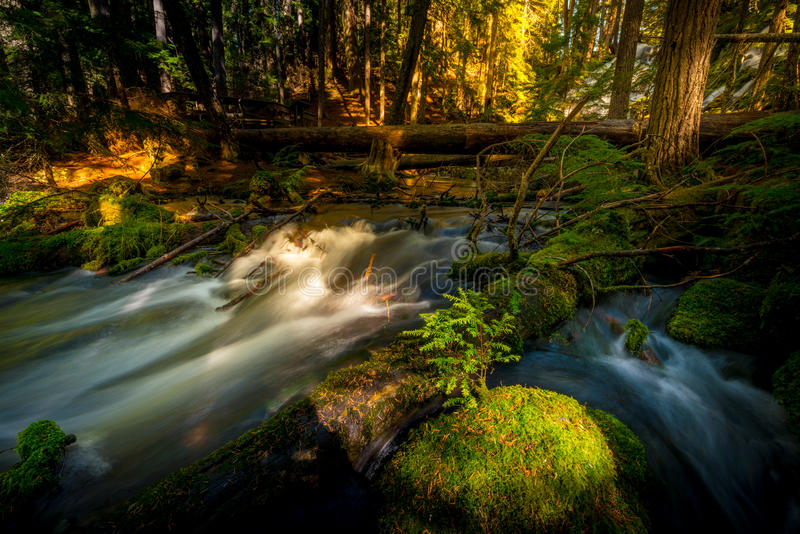 Water Cascade Clearwater Creek Umpqua National Forest stock images