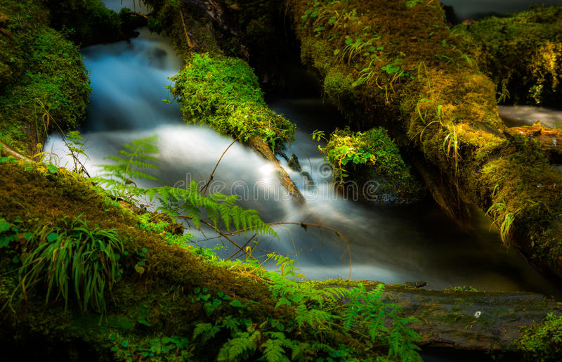 Water Cascade Clearwater Creek Umpqua National Forest royalty free stock images