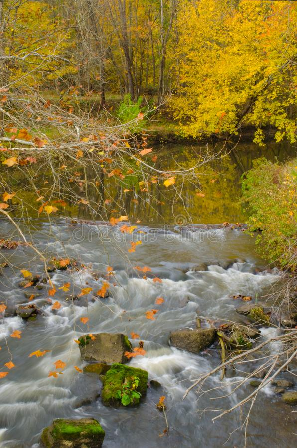 Water cascading over rocks in a river with yellow trees on an Autumn day. Yellow trees and cascading water over rocks in a river on an Autumn day stock image