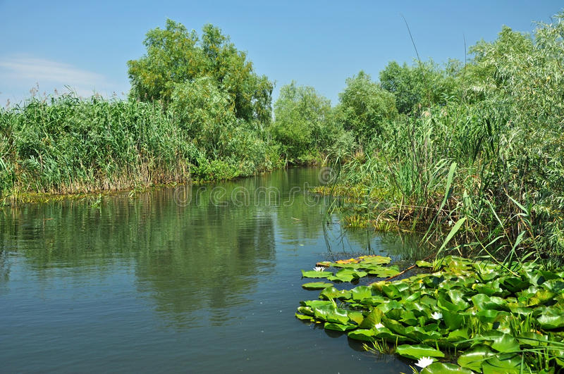 Water channel in the Danube delta. With swamp vegetation and flooded forest stock photography
