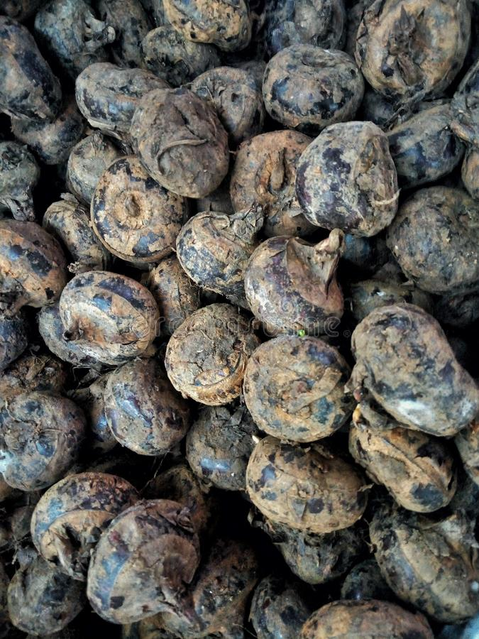Water chestnuts cluster. Close-up, fruits, health, popular royalty free stock photos