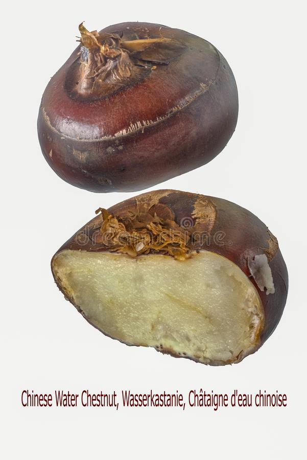 Water chestnuts, isolated. Chinese water chestnuts, isolated, Eleocharis dulcis stock images