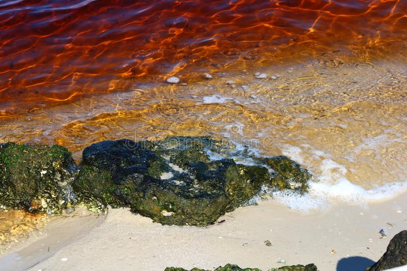 Red tide. Water color effected by red tide stock photo