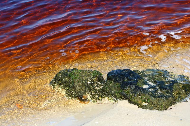 Red tide. Water color effected by red tide royalty free stock photography