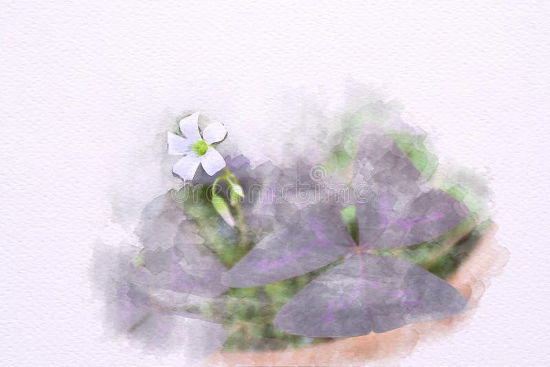Water color of Oxalis triangularis , False Shamrock plant, stock illustration