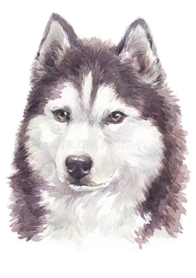 Free Water Colour Dog Painting, Brown-white Colour Siberian Husky  052 Royalty Free Stock Photo - 144075905