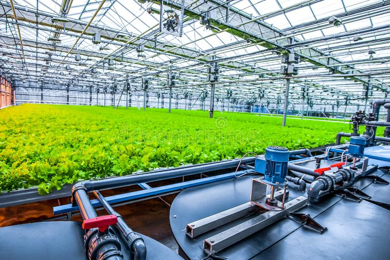 Water conveying at hydroponic plantation. Special pumps providing water to green salad stock image