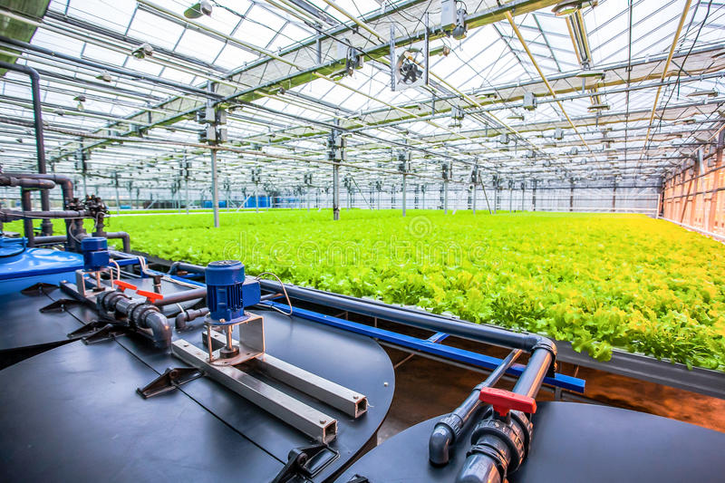 Water conveying at hydroponic plantation. Special pumps providing water to green salad royalty free stock image