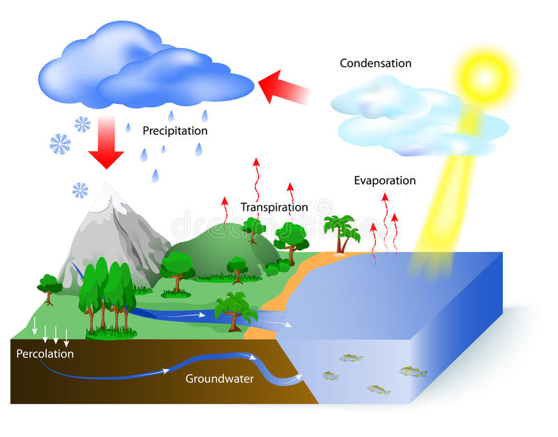 Water Cycle Stock Vector Illustration Of Flow Explicative 60497930
