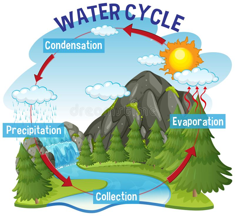 Water Cycle Stock Illustrations  U2013 5 227 Water Cycle Stock