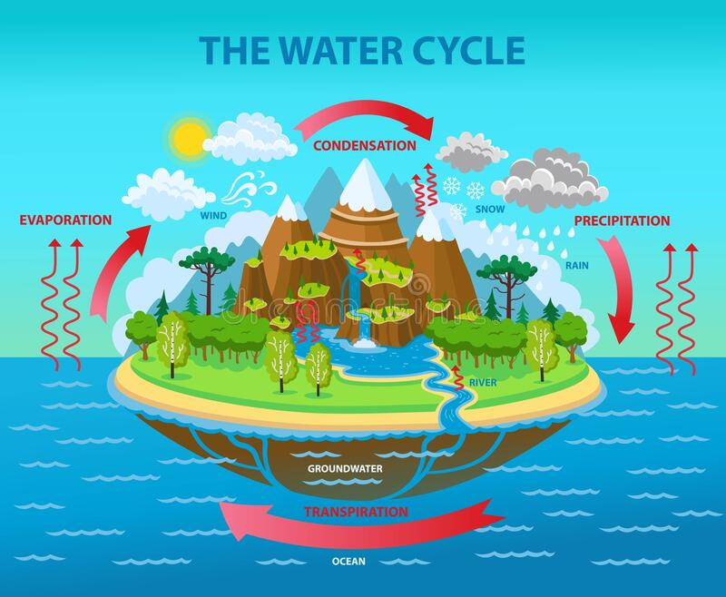 Water Cycle Cartoon Stock Illustrations – 747 Water Cycle Cartoon Stock Illustrations, Vectors & Clipart - Dreamstime