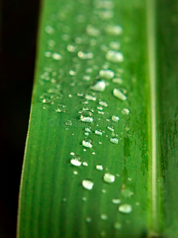 Water Dew on Leaf stock image