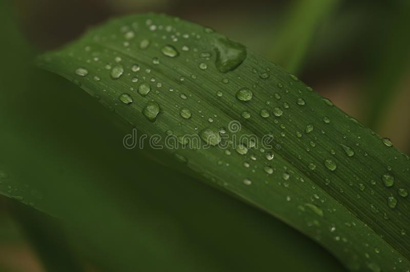 Water Dew Photo of Green Leaf Plant stock photos