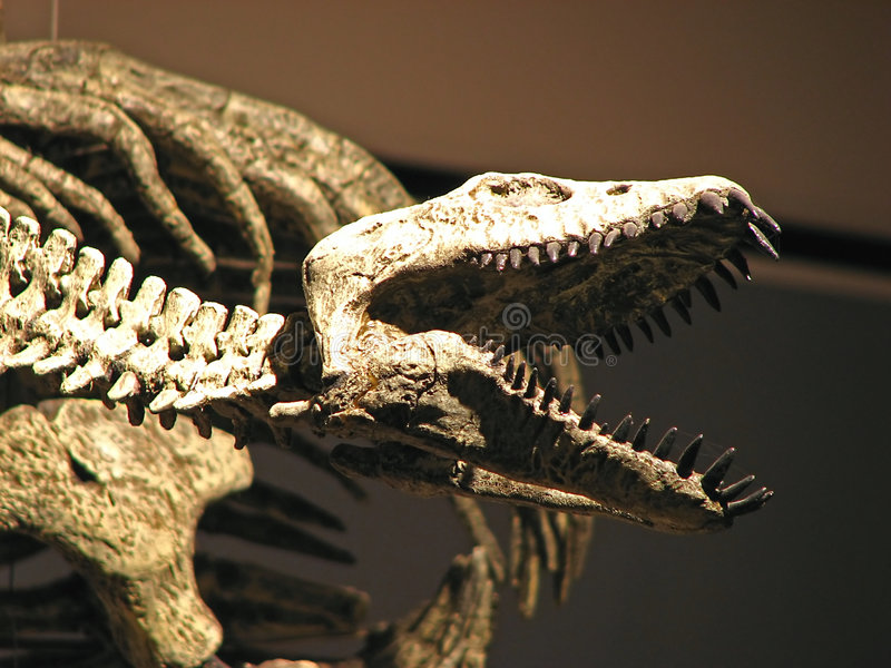 Water dinosaur skeleton royalty free stock photos