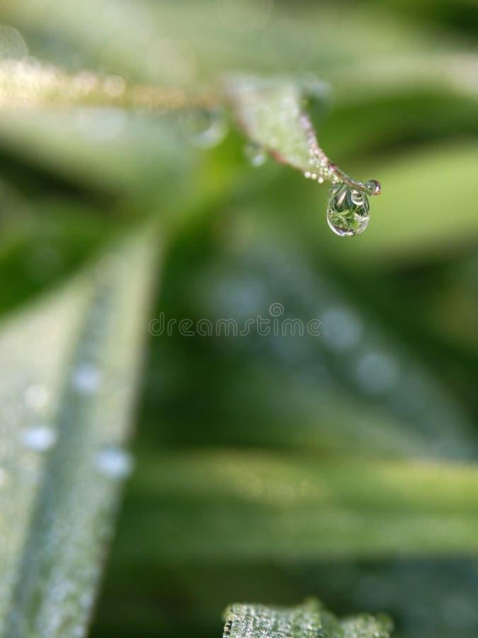 Download Water Drop #01 Royalty Free Stock Photos - Image: 4898008
