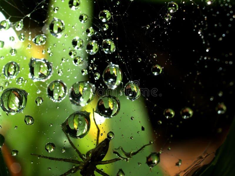 Download Water drop 1 stock image. Image of nature, fresh, water - 5529607