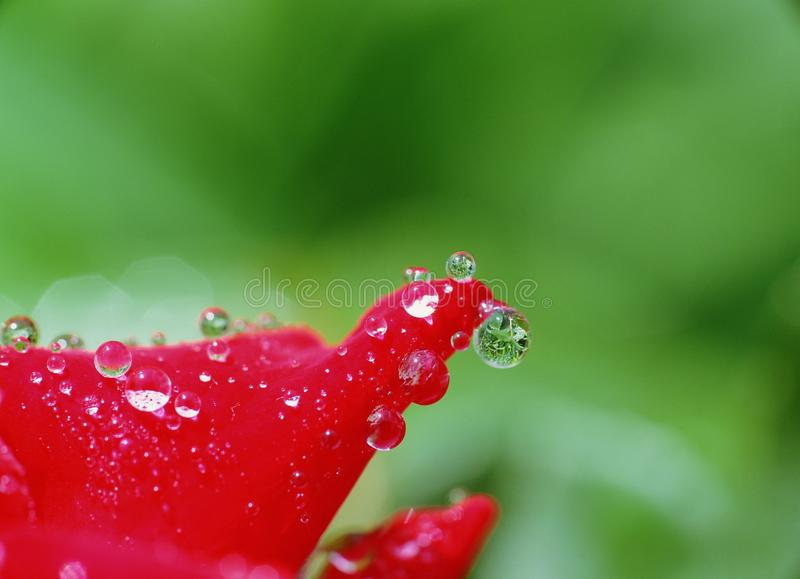 Water Drop Stock Photos
