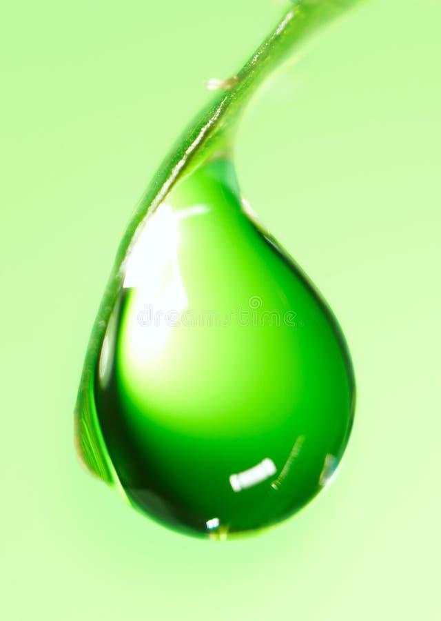 Download Water Drop stock photo. Image of growth, beginning, habitat - 4074674