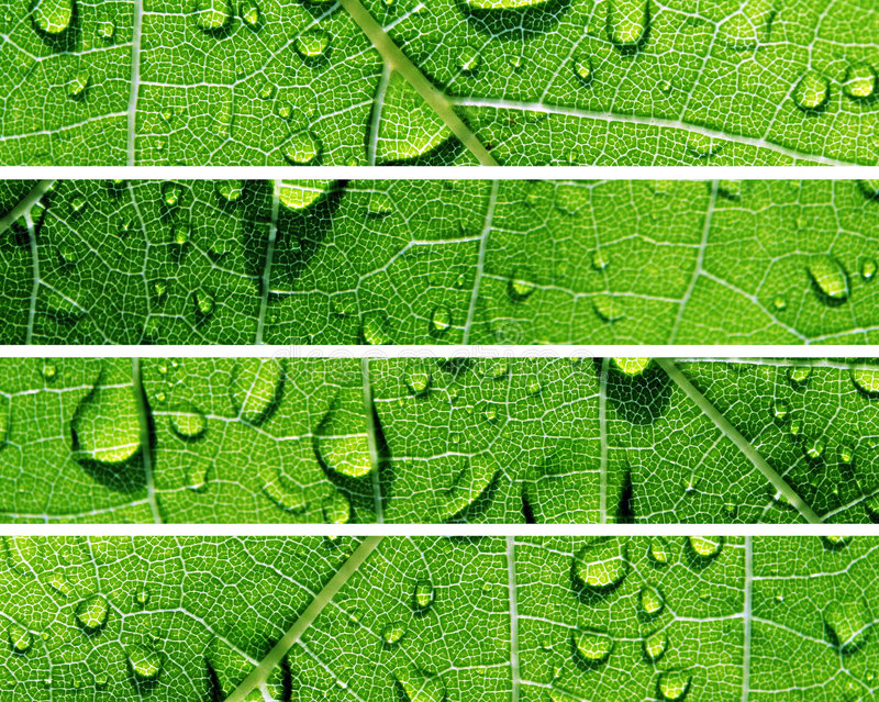 Water Drop Banners royalty free stock photos
