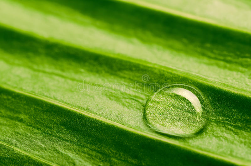 Download Water drop on fresh leaf stock image. Image of nature - 29345417