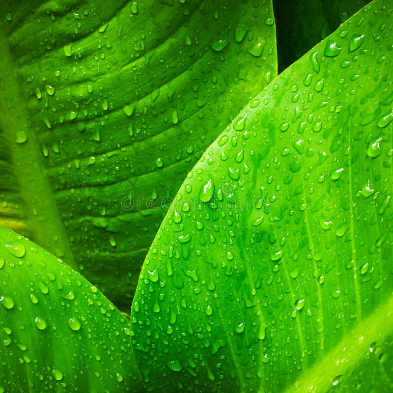 Download Water drop on  leaves stock image. Image of detail, growth - 16507229
