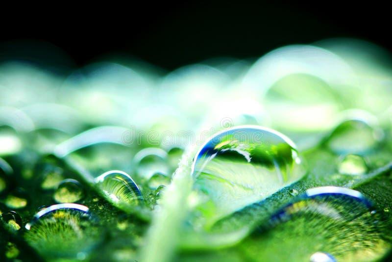 Water drop macro royalty free stock photo