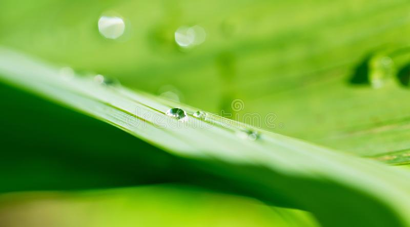 Water drop on Plant. Macro shot of water droplet stock image