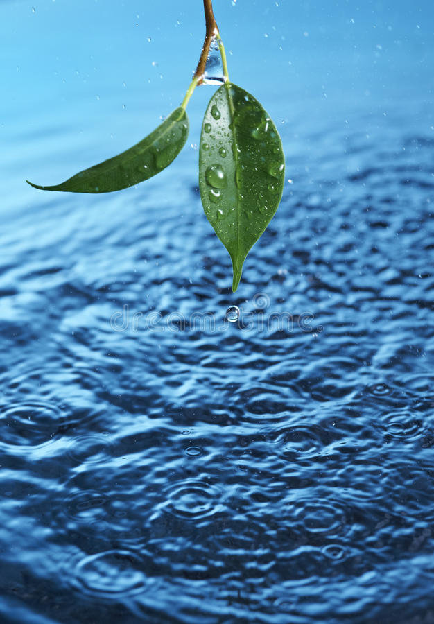 Download Water droplet stock image. Image of surface, plant, rain - 26908411