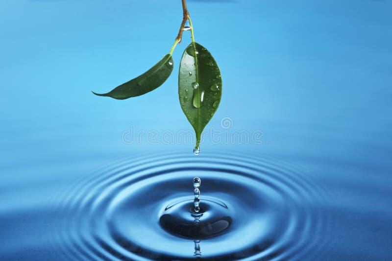 Download Water droplet stock image. Image of splash, green, fresh - 26908431