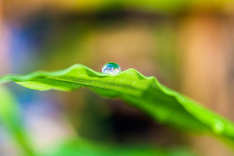 Water droplet on green leaf. In nature royalty free stock photo