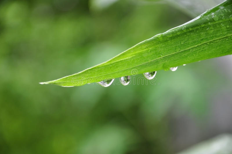 Water droplet on leaf royalty free stock images