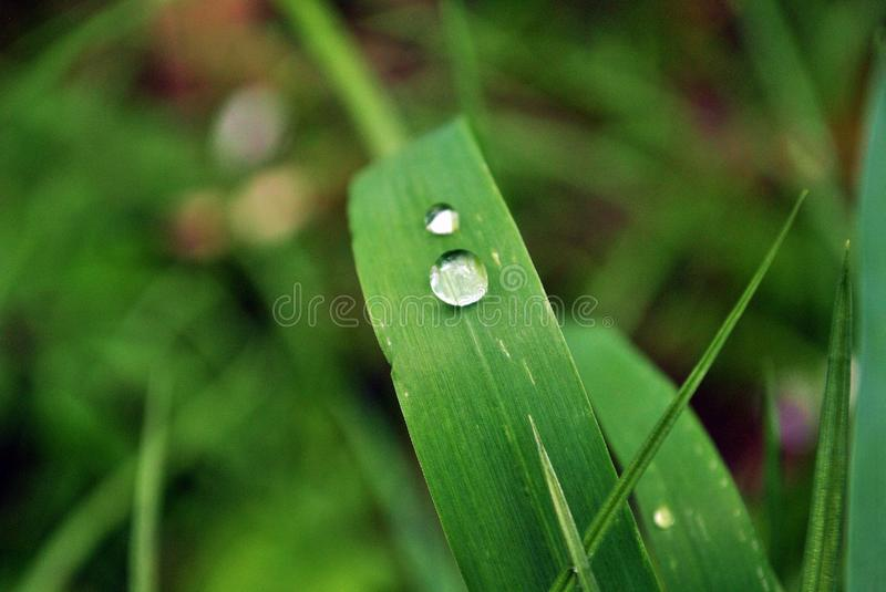 Water droplet royalty free stock image