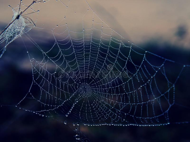 Water droplet on Spiderweb on a winter early morning stock photos