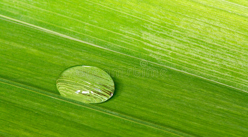 Water Droplet On A Tropical Leaf Background Stock Photos