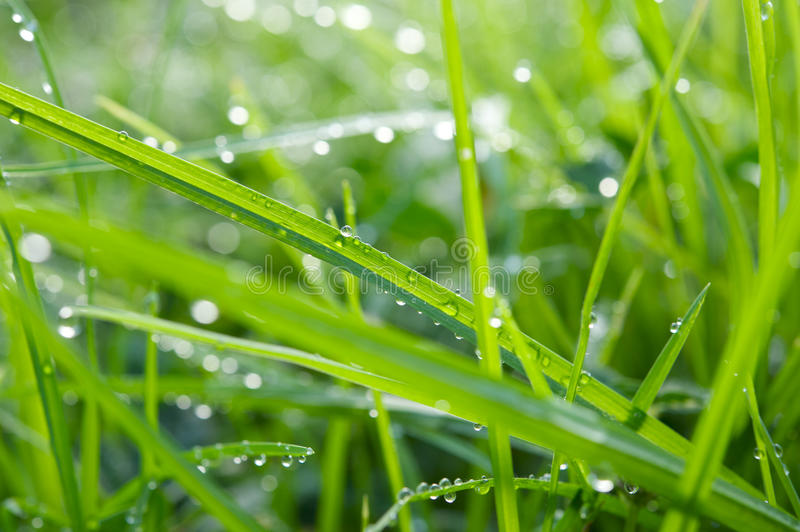 Download Water droplets on grass stock photo. Image of green, droplet - 10610956