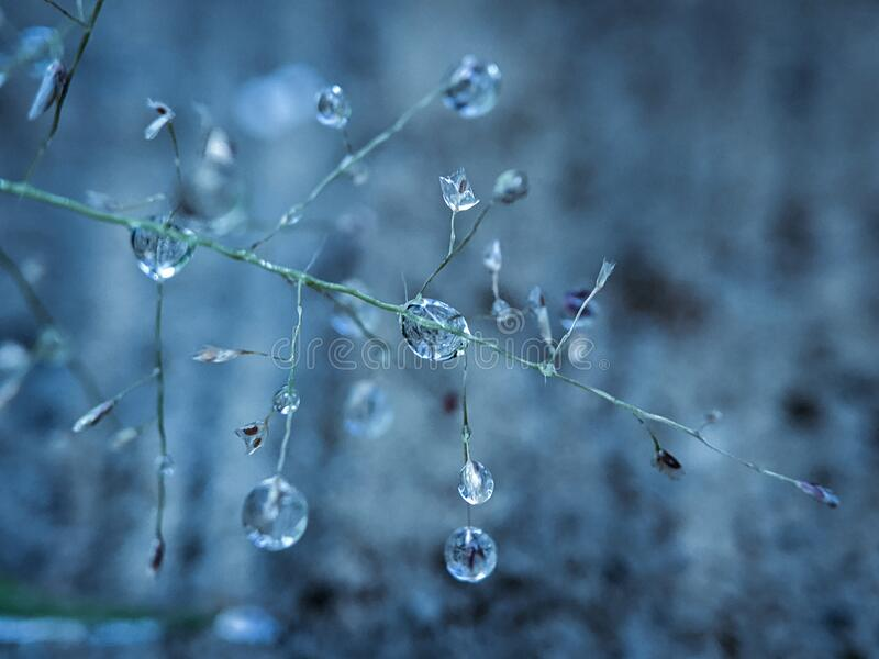 Water droplets on grass stock photo royalty free stock images