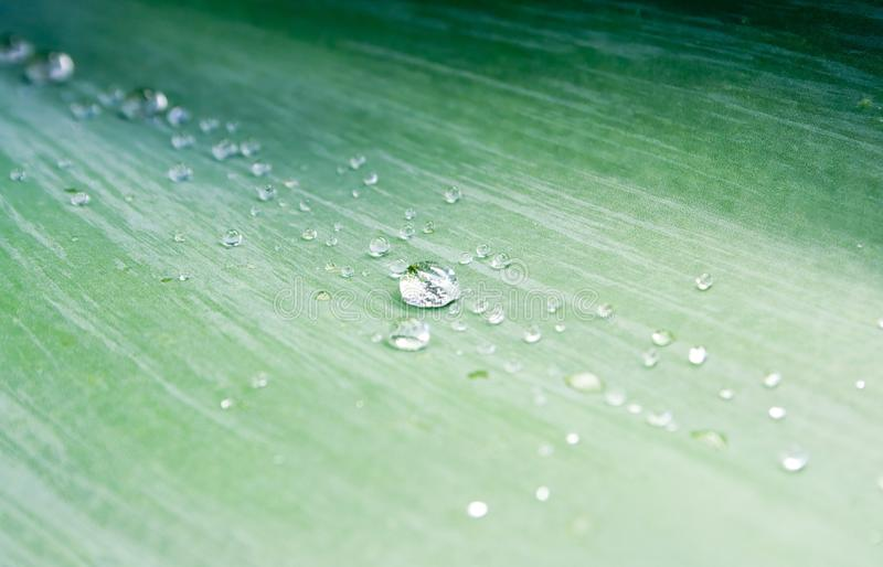 Download Water Droplets On Green Agave Leaf Stock Image - Image of agave, nature: 13785439