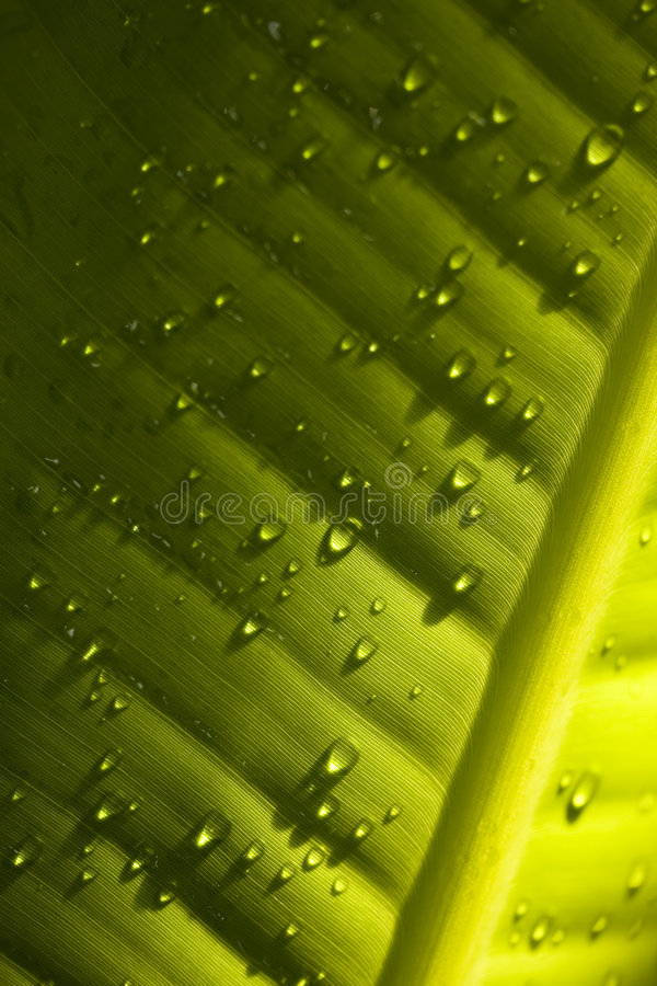 Download Water Droplets On Green Leaf - Detail Stock Photo - Image: 7631808