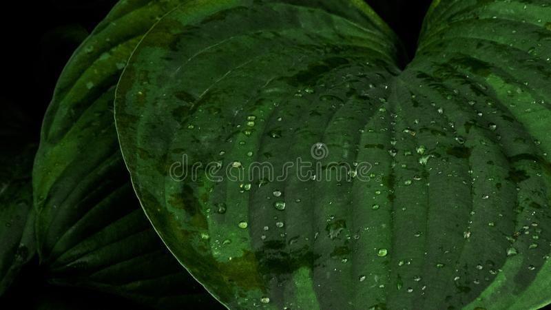 Water droplets on the leaves stock photos