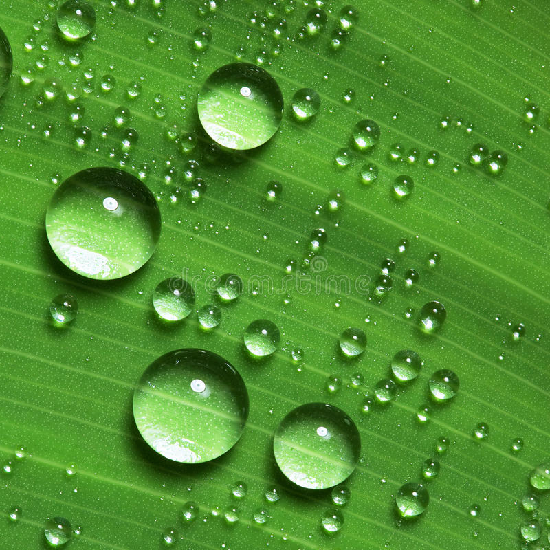 Free Water Droplets On Leaf Royalty Free Stock Photo - 14259335
