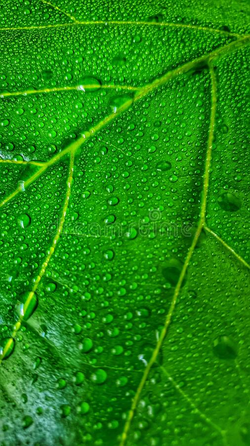 Water droplets on a plant leaf stock image