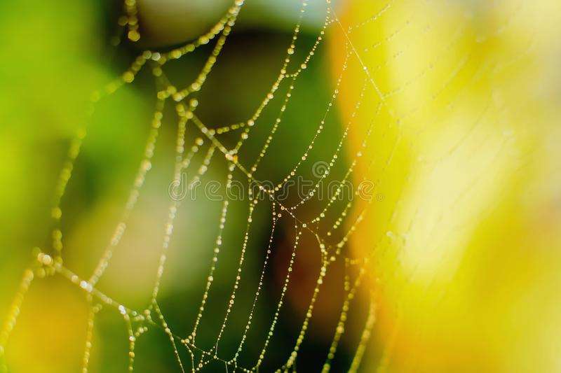 Water droplets on the spider web stock photos